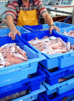 rensa fisk i norge